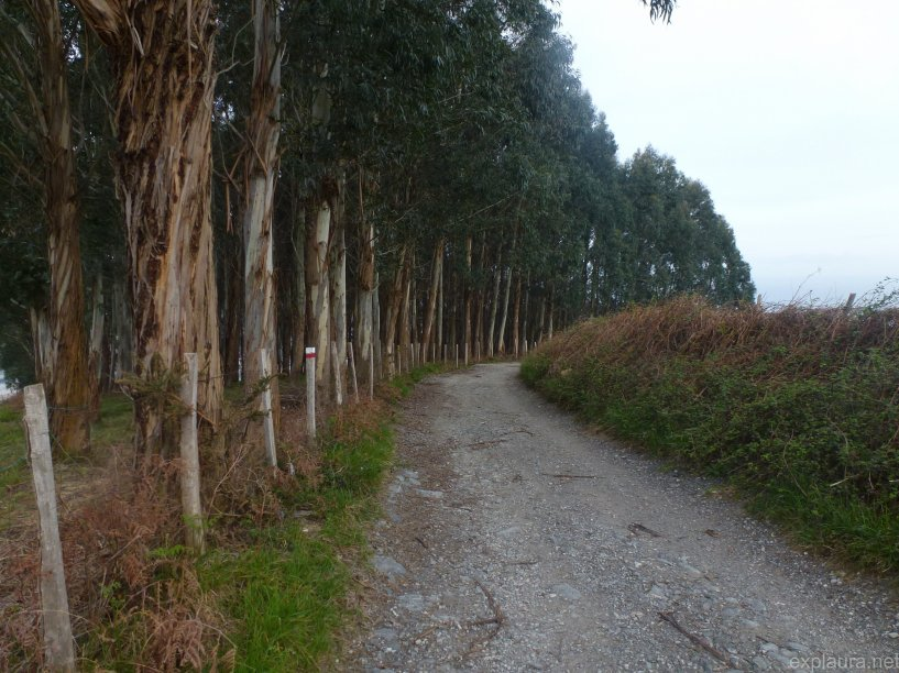 The first of many eucalyptus forests we would encounter.